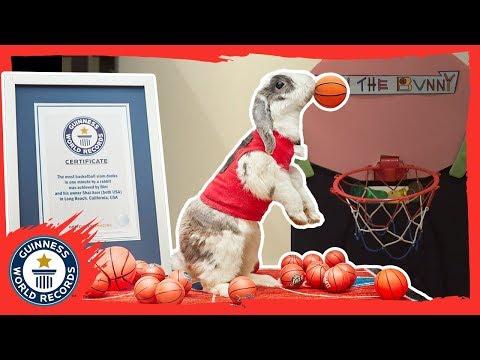 Bini the slam dunking basketball bunny - Meet the Record Breakers