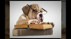 Veterinary SEO, PPC, Marketing and Web Design Services