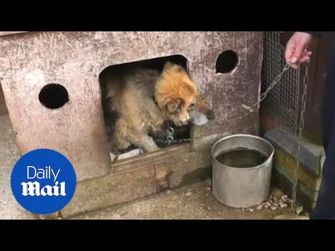 RSPCA Shows Animals Kept In Awful Conditions During 'puppy Farm' Raid