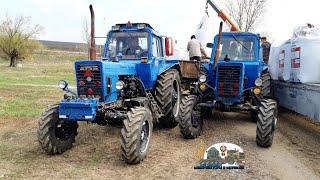 Мтз 82 и 2 Мтз 80 Выгружают фуру Scania с селитрой