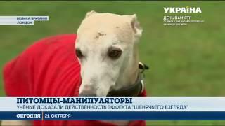 Британские учёные доказали, что собаки способны манипулировать людьми