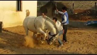 vuclip Horse dance