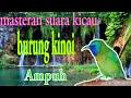 Suara Kicau Burung Kinoi Ampuh Untuk Masteran  Mp3 - Mp4 Download