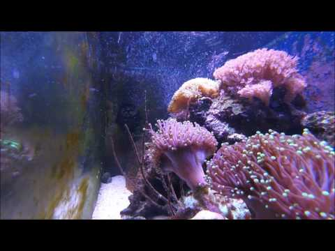 BEST FISH TANK ASMR IN THE WORLD
