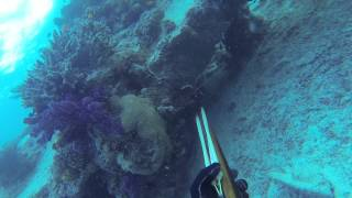 Spearfishing the Swains Reefs- Southern Great Barrier Reef 2014