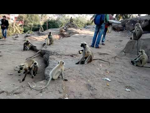 Funny Monkey in khandagiri hill .