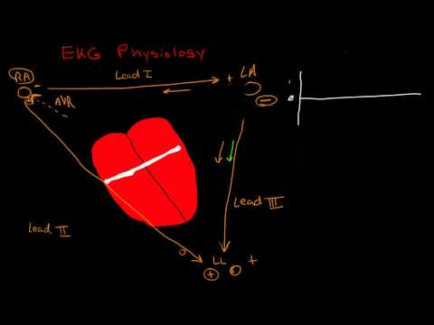 Physiology of the EKG