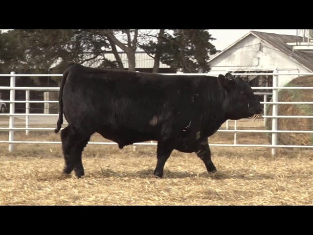 Express Ranches Lot 439