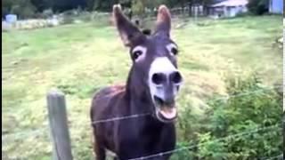 MC Donkey: Quietschender.... Esel (Dum & Bass RMX )