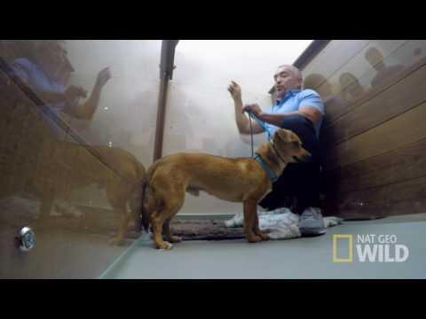 Cesar Millan's Dog Nation: Los Angeles 'Brutus'
