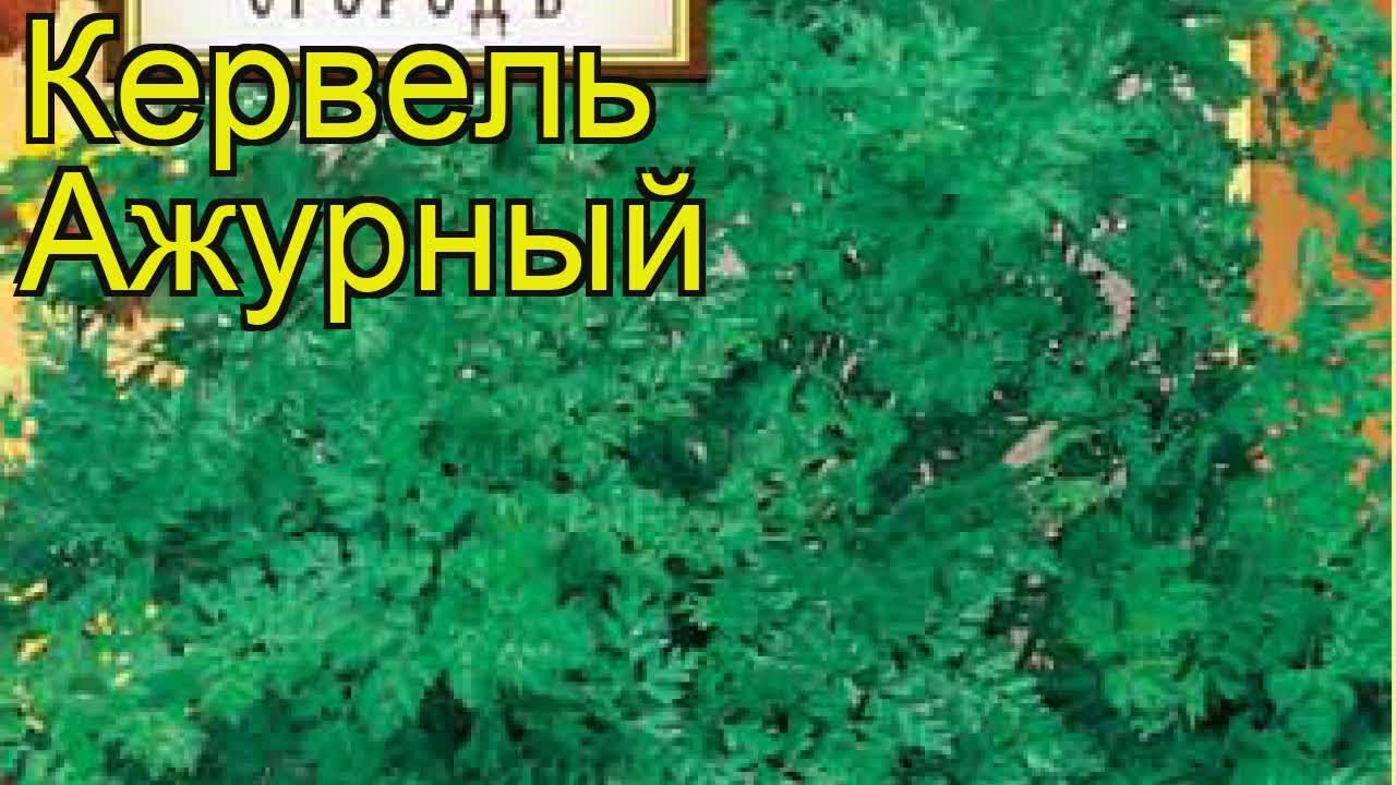 Адель семена редиса (Lucky Seed), Антифейк Часть 48 - YouTube