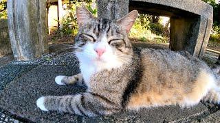 公園のベンチの下で寝ていた野良猫をナデナデしてきた