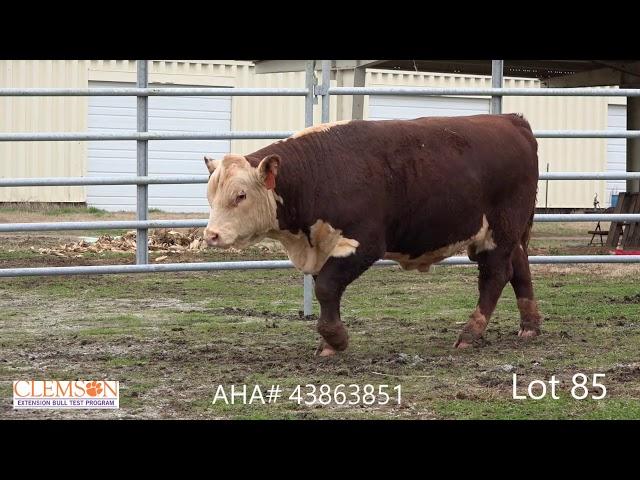 Clemson Extension Bull Test Lot 85