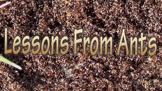 Ants are Awesome | Lessons from Ants