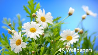 Flowers 4k Wallpaper For Android // #wallpaperapps screenshot 3