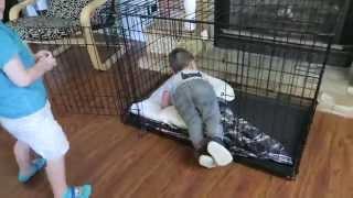 Crate Training Children (8-13-15) [276]