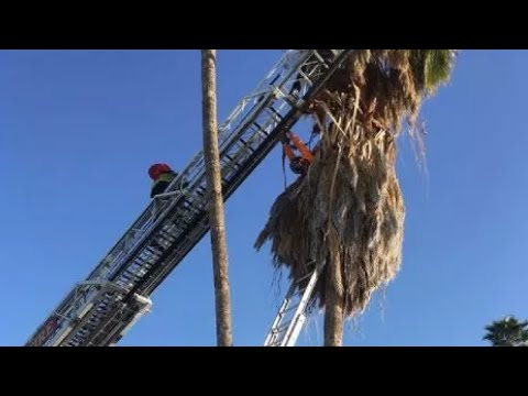 VIDEO: Tucson fire crews rescue man from palm tree