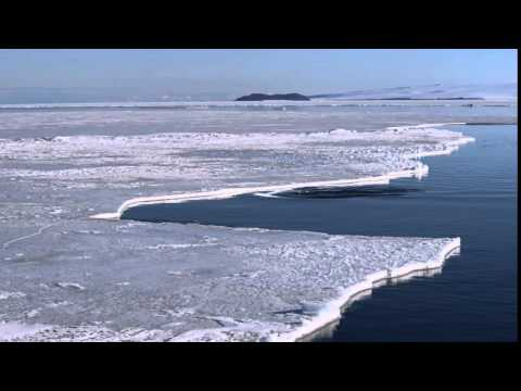 Minke Whale - Diving under the ice