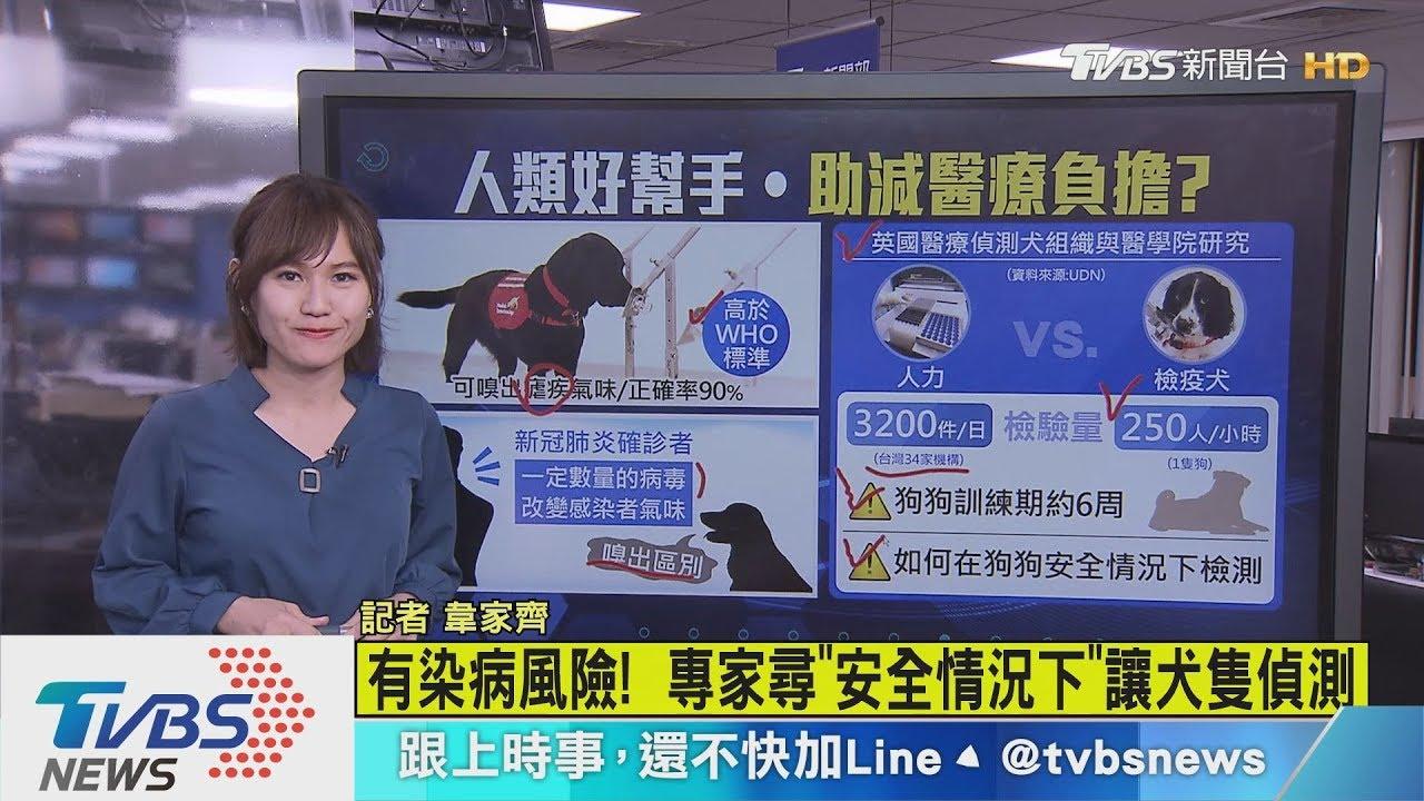 【十點不一樣】防疫新幫手是「牠」?英國訓練醫療犬嗅出感染者 - YouTube