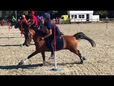 Denmark   Travel Video   Horse Event