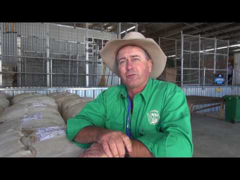 Sheep Farming In Australia - Peppin-Shaw Ewe Flock Forum 2017