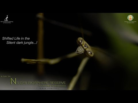 A Day in Nilgiri Biosphere Reserve - A Lifescape to Experience | Full HD 1080p