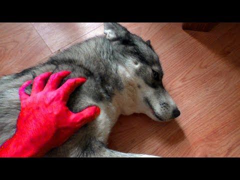 Полезный сайт о дрессировке собаки дома. Как научить