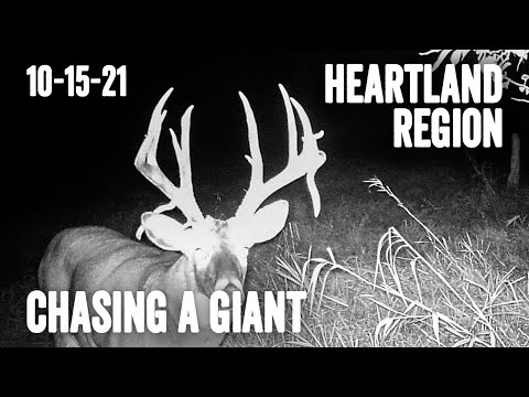 Chasing A Giant, First Ever Bow Hunt   Heartland