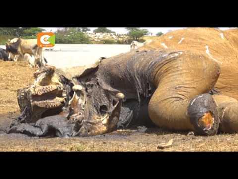 Uga wa Majangili: Mvutano kati ya wafugaji na wakulima Laikipia