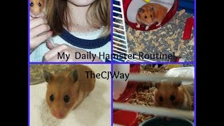 My Daily Hamster Routine Thumbnail
