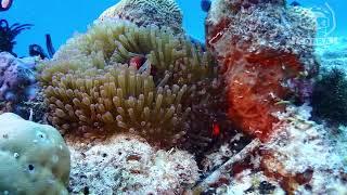 파밀라칸,발리카삭 투어영상 [스쿠버다이빙/scubadiving/코브라다이브] Philippines scuba diving memories