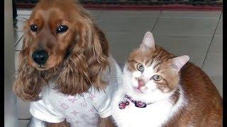 犬が旅立ちました 猫の様子に泣けた・・・ thumbnail