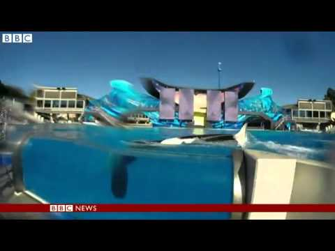 documentary-sparks-us-debate-on-whales-in-captivity