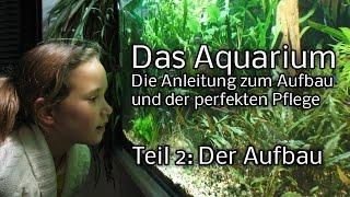 Das Aquarium - Die Anleitung zum Aufbau und Pflege. Teil 2: Der Aufbau