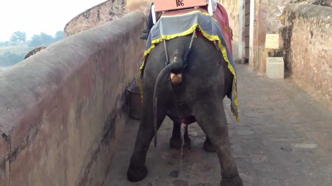 Pee Like a Race Elephant (Elephant Ride 2 of 3) - YouTube