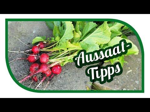 Gartentipps Und Aussaattipps  Im August 🌱 Garten Im August 🌱 Gartentipps