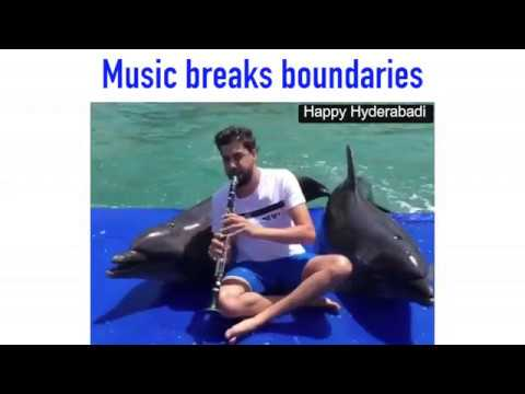 Dolphin and elephant Reaction to Music - Music Breaks Boundaries