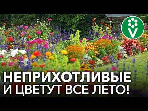 ЛЕНИВАЯ КЛУМБА! Лучшие однолетние цветы, которые непременно стоит посеять!