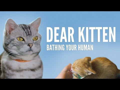 Dear Kitten: Bathing Your Human