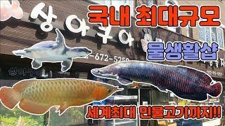 [TV생물도감]국내최대규모의 물고기샵에 세계최대크기의 물고기가있다?
