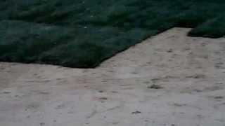 как выглядет рулонный газон(, 2014-01-26T12:49:32.000Z)