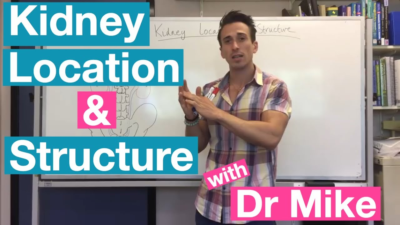 Kidney Location And Structure Youtube