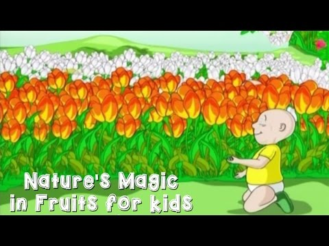 Nature's Magic in Fruits for kids