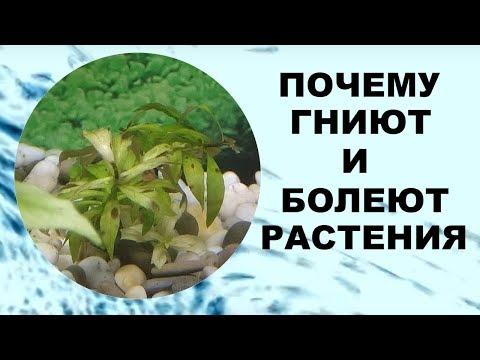 Болеют аквариумные растения
