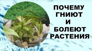Почему гниют и болеют растения в аквариуме.