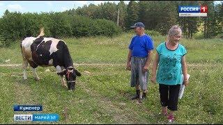Житель Марий Эл сшил для своей коровы бюстгальтер