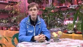 Дачники  Колоновидные яблони  Выпуск 19  Тагил ТВ