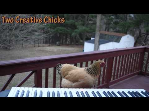 Patriotic Chicken Plays 'This Land Is Your Land'