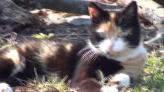 Kot i jaszczurka - piosenka rolnicza