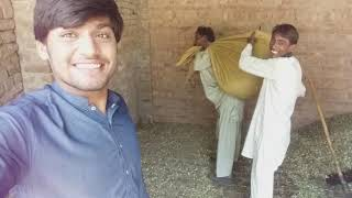 Village life in pakistan | life in village | bosal village vines #Epi4